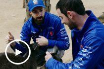 IndyCar duo visit WILD LIFE Sydney Zoo